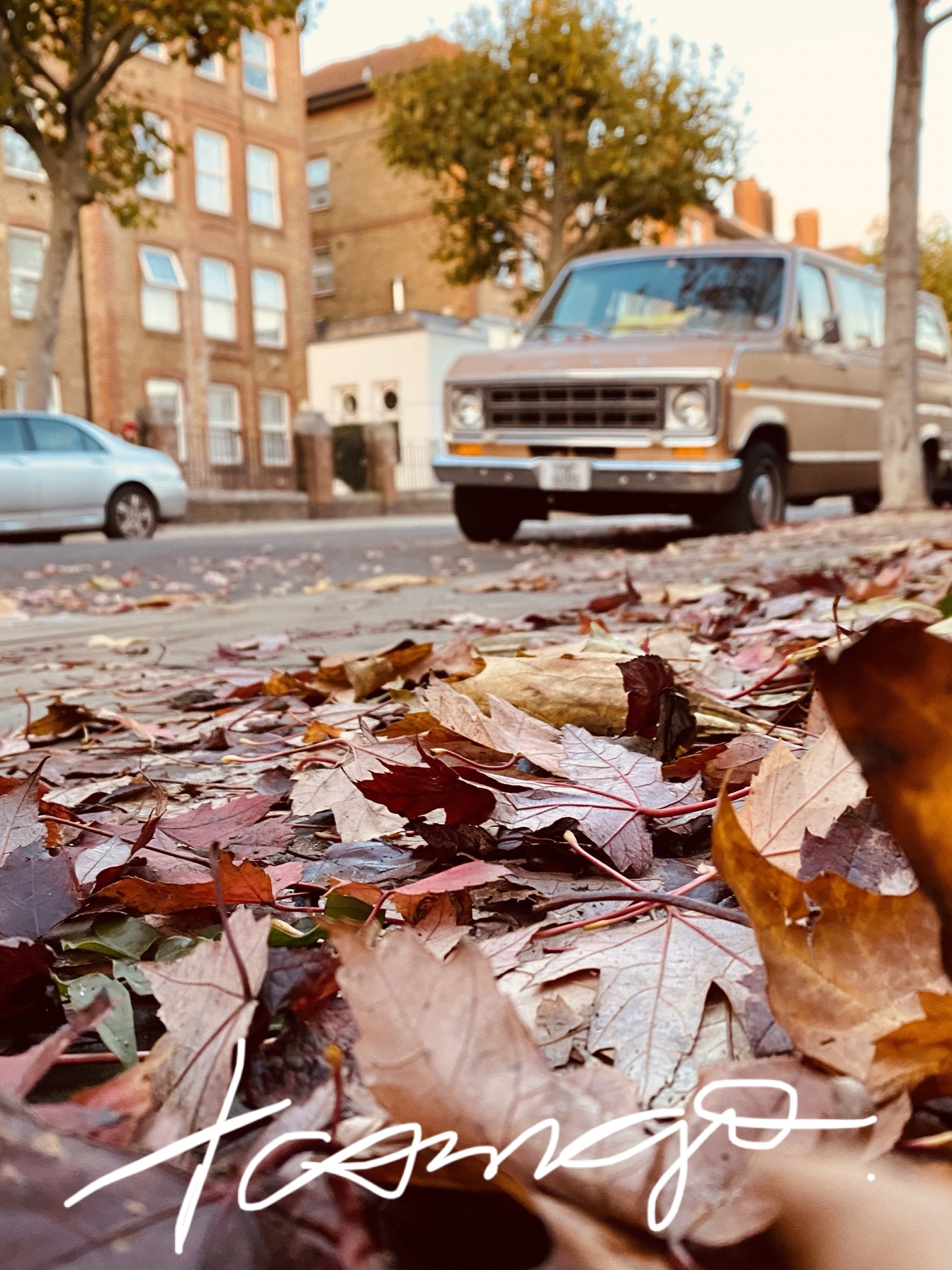Autumn leaves and an old car in the back