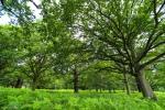 Wide angle green deep woods.